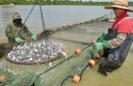 U.S. catfish producers harmed by rules meant to slow foreign market