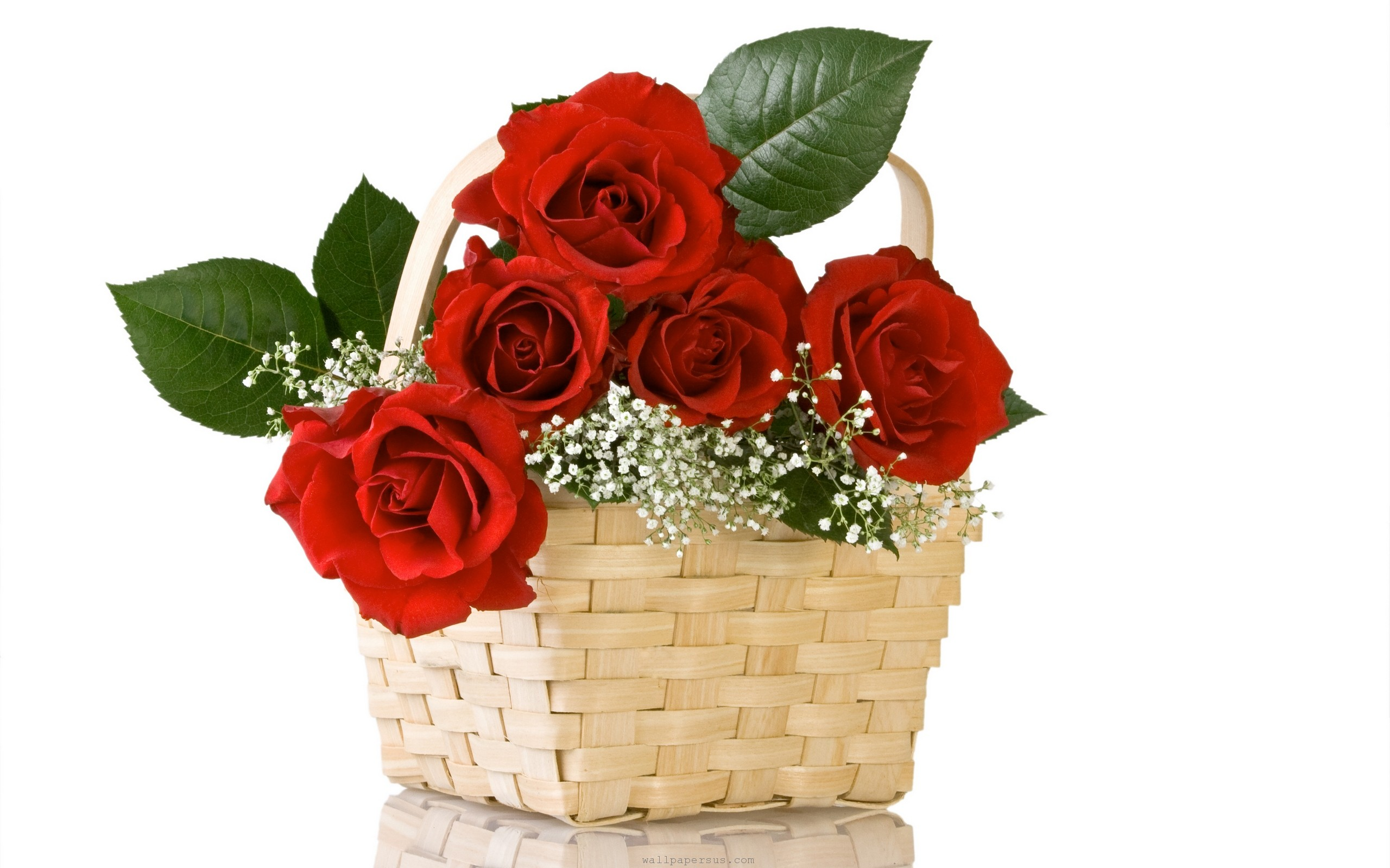 What kind of flowers would you like professional english pages what kind of flowers would you like izmirmasajfo